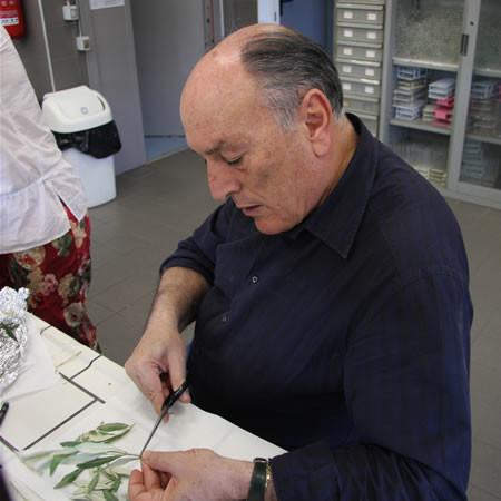 Le professeur Antonio Cimato, chercheur en chef à l'Institut pour la valorisation du bois et des essences d'arbres du Conseil national de la recherche (IVALSA-CNR), prépare des échantillons de feuilles pour l'étude de leur ADN.