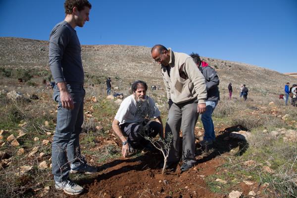 Photo 1/3 Le rabbin Arik Ascherman, confondateur de Rabbins pour les Droits de l'Homme, plante un olivier avec des volontaires israéliens et Bassem, le propriétaire du terrain. © TD/CTS