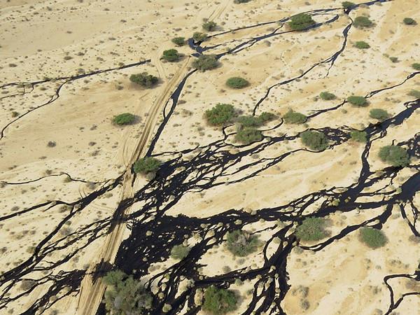 Catastrophe écologique dans le Sud d'Israël