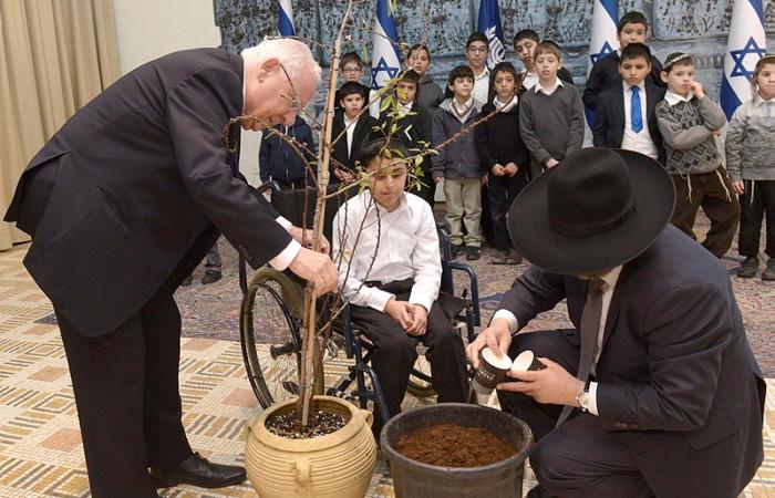 Aux racines de Tou Bichvat, le nouvel an des arbres