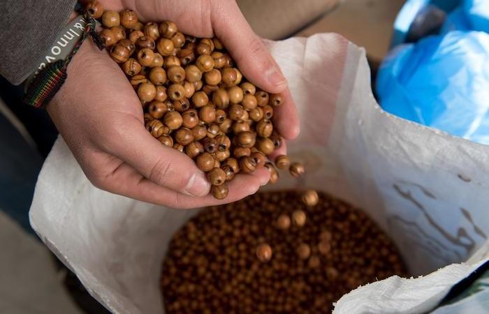 81 millions de grains de chapelet seront nécessaires.