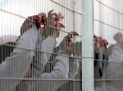 La Haute Cour de justice israélienne rejette la loi contre les «infiltrés»