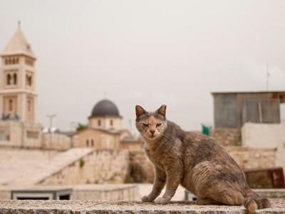 Nourrir les chats de Jérusalem: une fausse bonne idée ?
