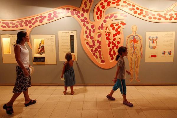 Rififi au musée d'histoire naturelle à Jérusalem