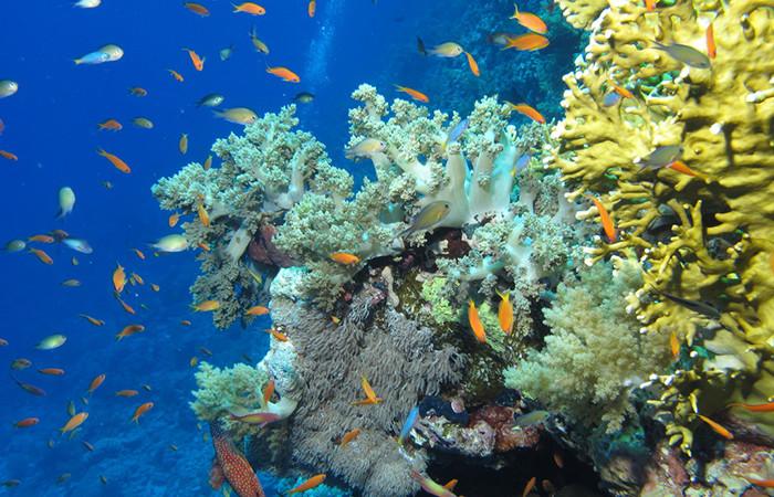 Mer Rouge : huit pays prennent les coraux par les cornes