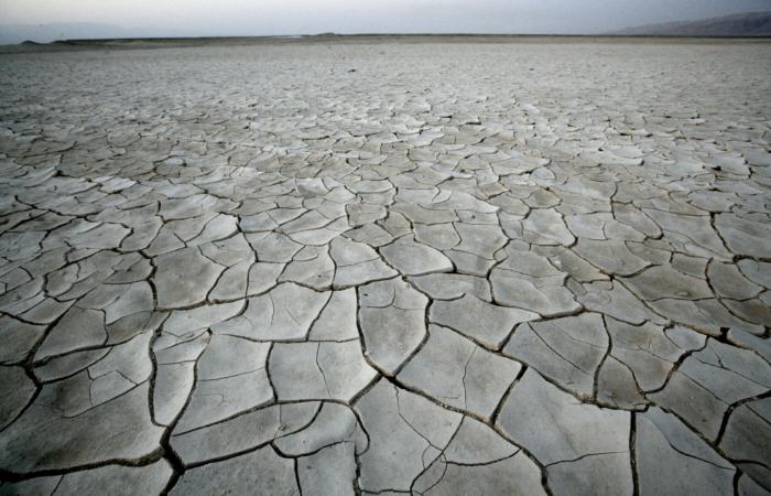 La terre craquelée par la sécheresse. Israël/Cisjordanie ©ABIR SULTAN/Flash90