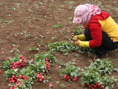 Le poste alimentaire reflète les nombreuses crises au Liban