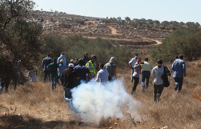 Appel pour une récolte pacifique des olives en Cisjordanie