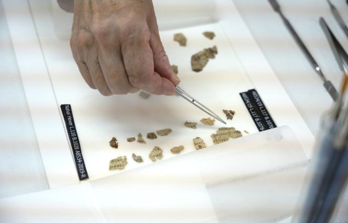 Fragments du rouleau découvert dans le désert de Judée après conservation © Shai Halevi, Israel Antiquities Authority