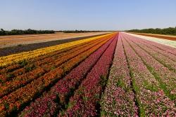 Shnat shmita: les terres au repos pendant un an en Israël