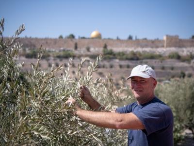 Une récolte des olives sous le signe de l'unité à Gethsémani